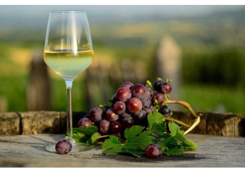 book wine tour in serbia fruska gora sremski karlovci vrsac